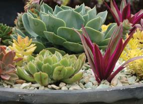 Succulents as Sculpture