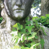 Entwined In Vines